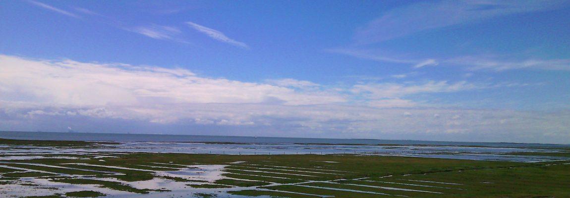 Die Salzwiesen bei Hochwasser